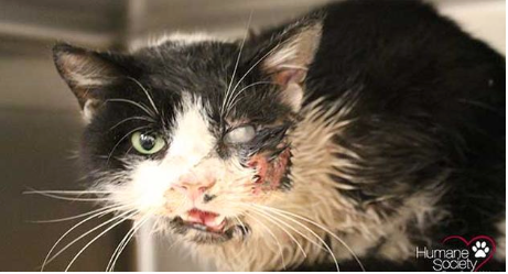 Zombie Cat Proves 'Pet Sematary' is Real, Florida is Screwed