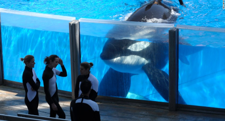 California Bill Could END SeaWorld's Killer Whale Shows