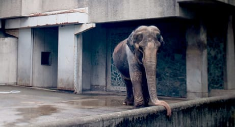 This Depressed Elephant Has Been Living in a Concrete Cell for 61 Years. You Can Help!