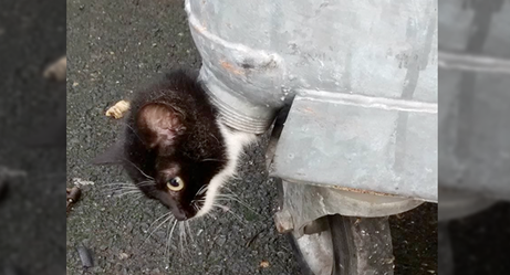 How Was This Kitten Rescued From the Most Compromising Place?