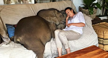 A Woman Saved This Baby Elephant From Certain Death, but Their Amazing Story Was Far From Over