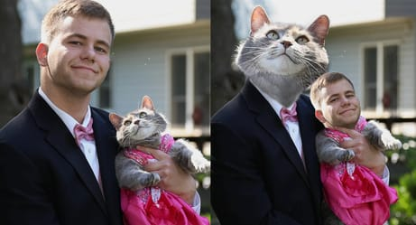 Photoshoppers Had a Field Day With This Guy Who Took His Cat to Prom