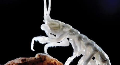 A Cave Was Sealed for Five Million Years and These Are the Bizarre Animals They Found Inside