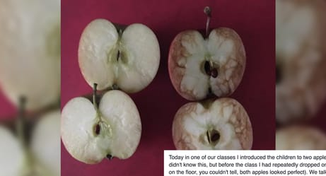 This Teacher Used Apples To Reveal A Devastating Truth About Bullying