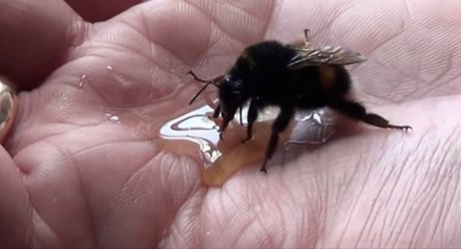 This Man Nursed A Giant Bumblebee Back To Health And Received The Most Adorable Thank You