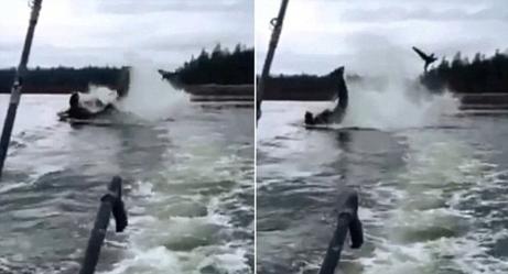 WATCH: Killer Whale Throws Sea Lion 20 Feet Into the Air!