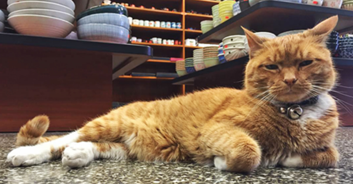 This Rescued Cat Has Been Running A Store For The Past 9 Years Without Taking A Day Off