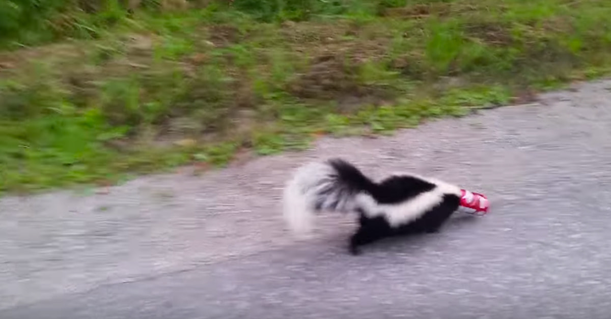 This Guy Rescuing A Skunk From A Coke Can Is The Hero We Need