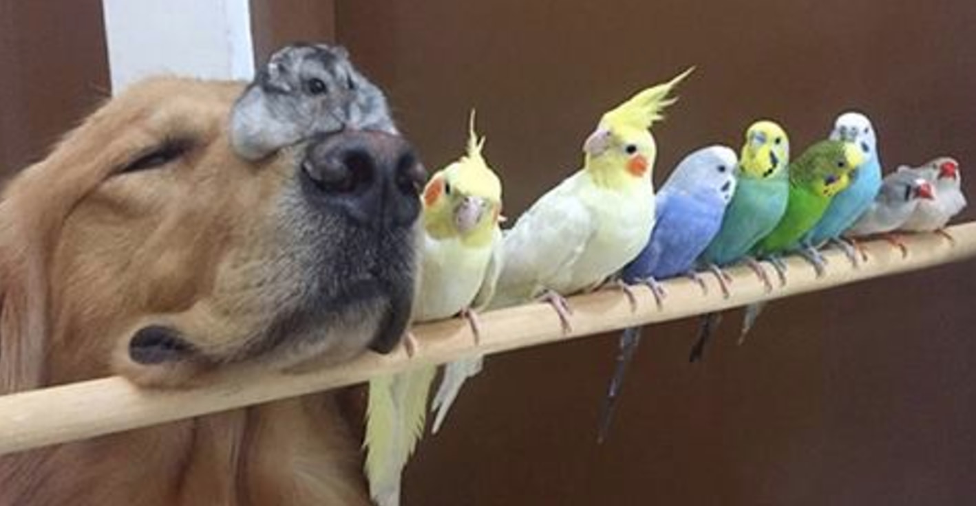 This Dog, 8 Birds And A Hamster Are The Most Adorable Best Friends Ever