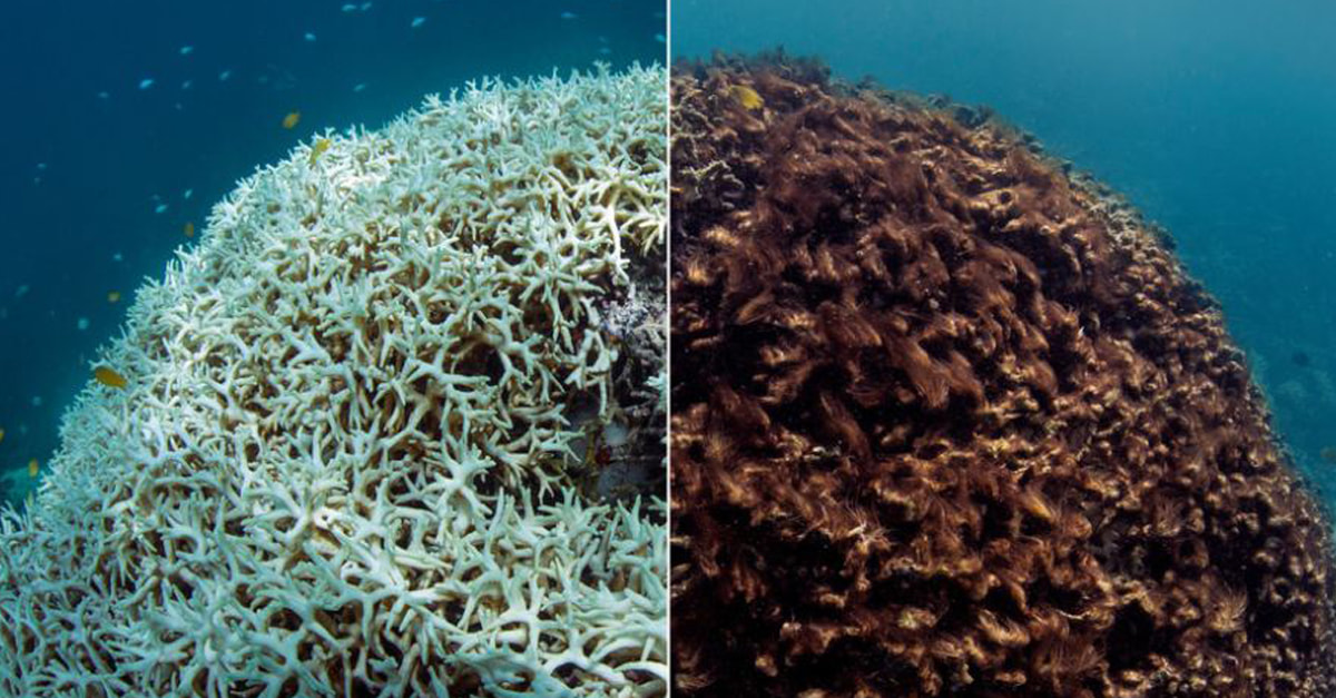The Great Barrier Reef Is Not Actually Dead Yet, But Scientists Need Your Help To Save It