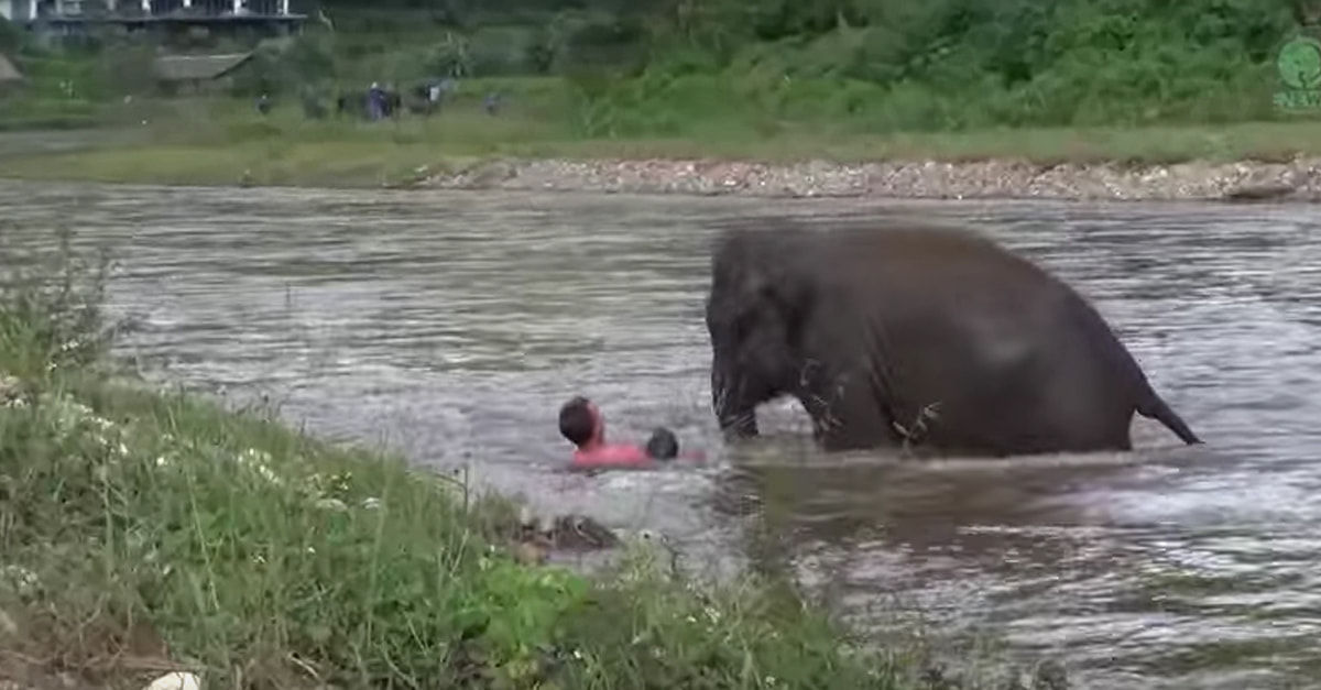 Watch As A Man Drowning Is Saved By An Elephant