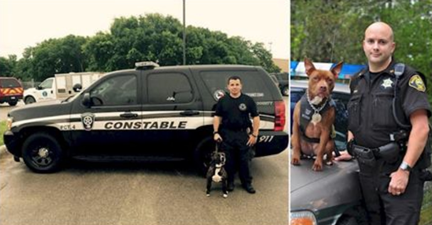 Police Departments Are Adopting Abandoned Pit Bulls To Save Them From Being Euthanized