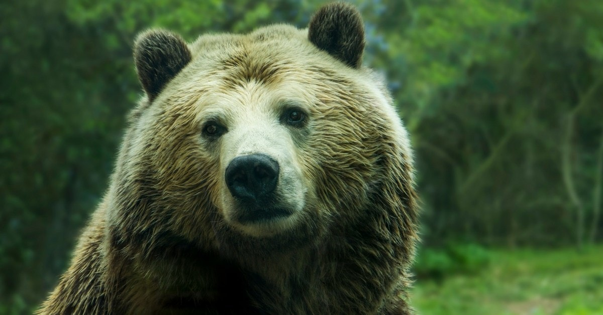 This Miserable And Angry Bear Was Epically Saved From A Septic Tank