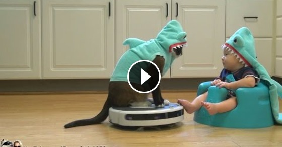 Shark Cat Entertains Shark Baby While Doing Some Chores