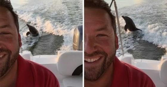 Dolphins Photobomb Florida Man While Taking Selfies