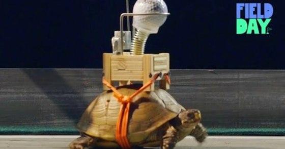 VIDEO: Slowest Rube Goldberg Machine Takes Six Weeks to Complete