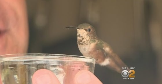 The Man, the Dog and the Hummingbird: How These 3 Became Inseparable!