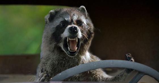 Genius Uses Unconscious Raccoon To Start Breathalyzer