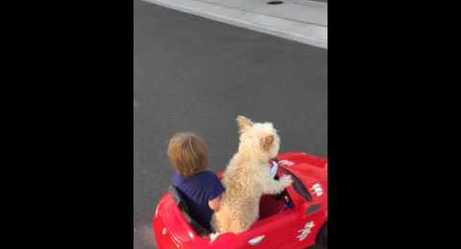 Watch as This Dog Chauffeurs This Little Boy!