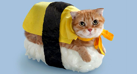 Some of the Funniest Pet Costumes