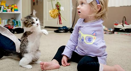 Three-Legged Kitten Adopted by One-Armed Toddler Share Amazing Bond