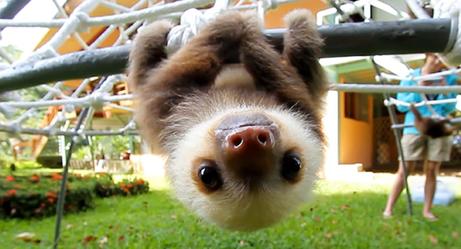 Baby Sloths: Earth's Ewoks