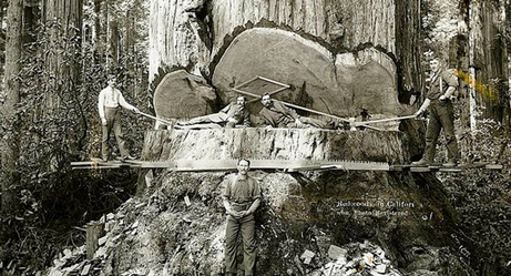 19th Century Lumberjacks Were No Joke