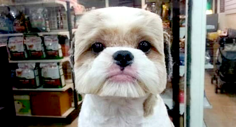 These Dogs Should Be Ashamed of Their Haircuts