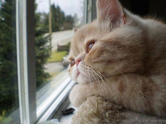 Pondering Cat | Dave Arnold's Blog