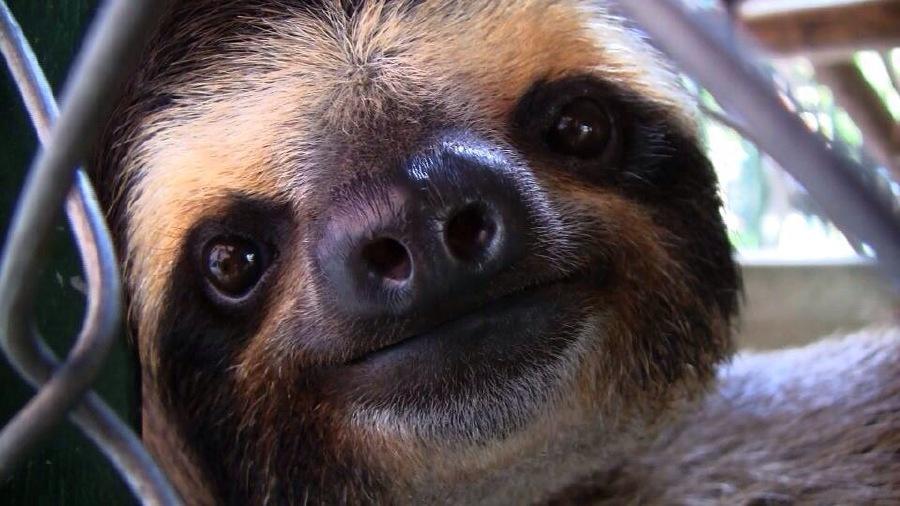live sloth cam