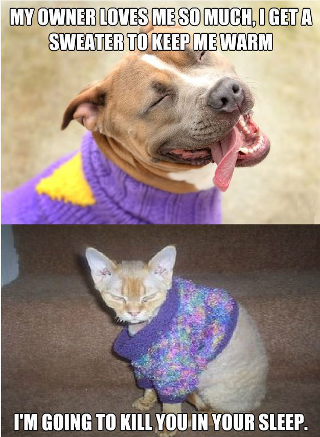 the differences between having dogs and cats for pets Difference between dogs and cats with the world growing with their ultra busy lives, we all need a unique companion pets as always are the backbone of such kind of camaraderie.