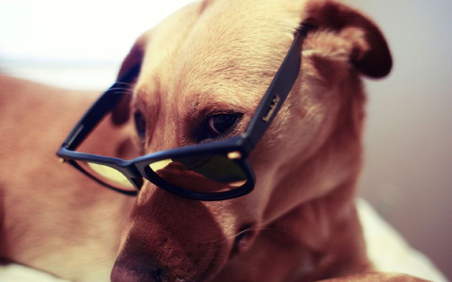 Animals with sunglasses - photo#8