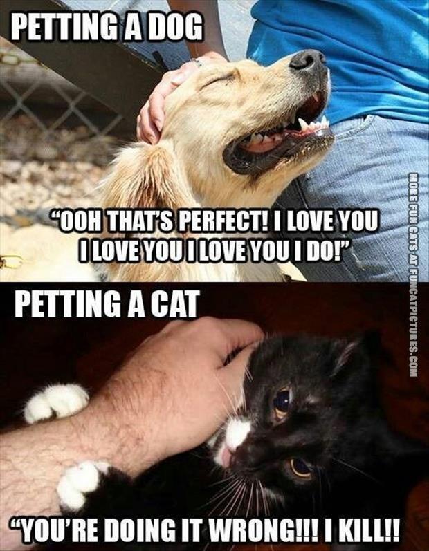Dog Vs Cats: Who Wins? - Litter Tray   Memes
