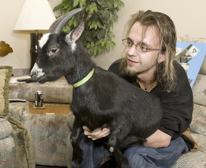R Goats Good Pets These Exotic Pe...