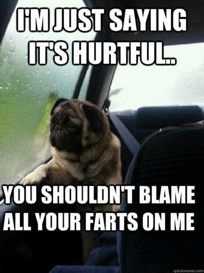 Can Dog Poop Make You Go Blind
