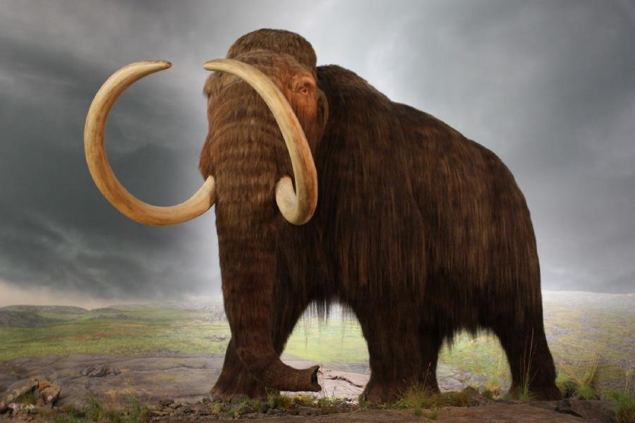 Amazing Animals That No Longer Exist West African Black