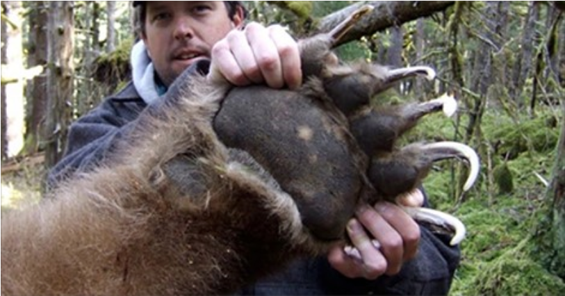 You Have No Idea How HUGE These Animals Are Until You've ...