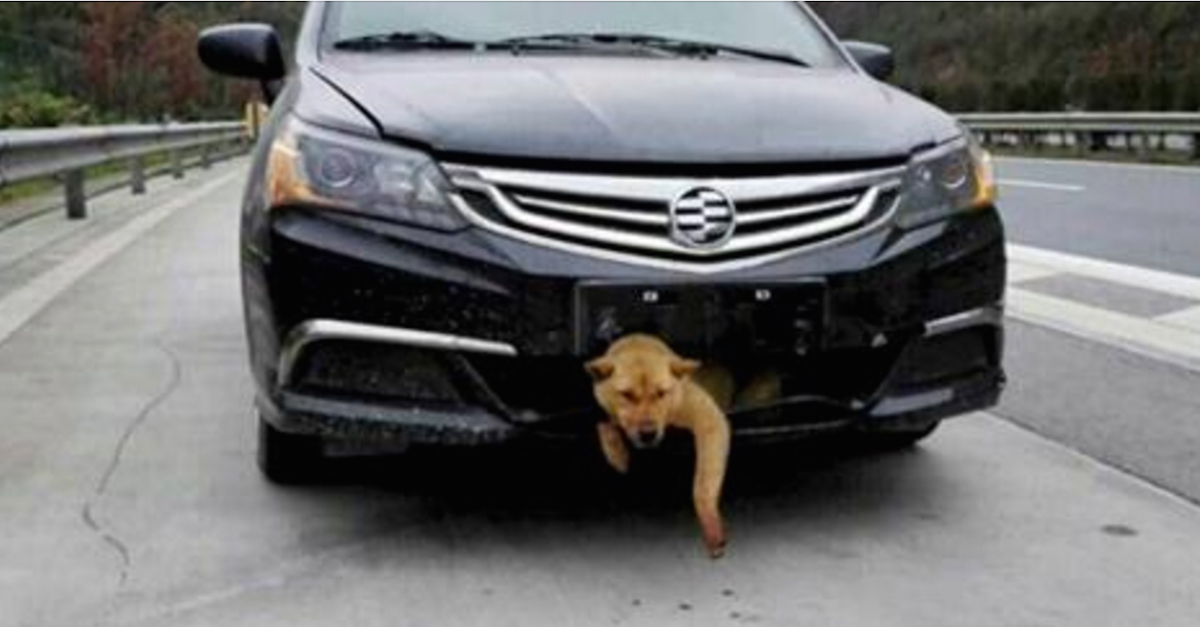 After Hitting A Dog And Driving For 200 Miles, This Guy Finally Decided To Check The Front Of His Car