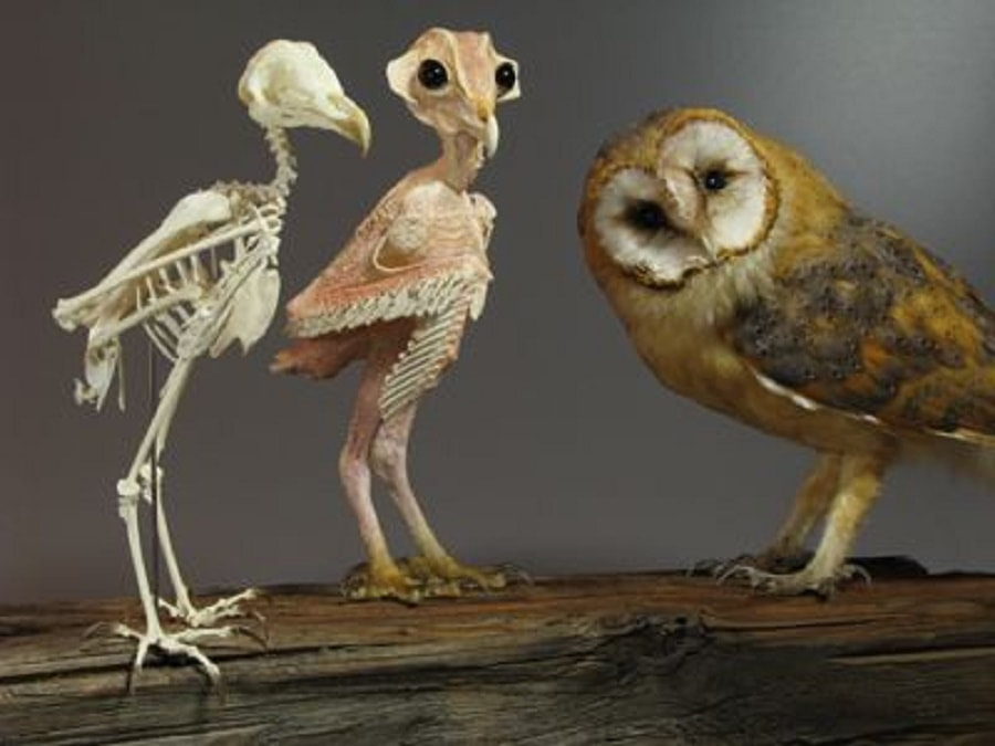 People Are Just Finding Out What Owls Look Like Without ...