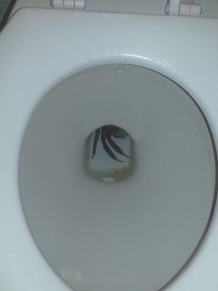 The 13 Most Terrifying Things Found In Toilets Slither